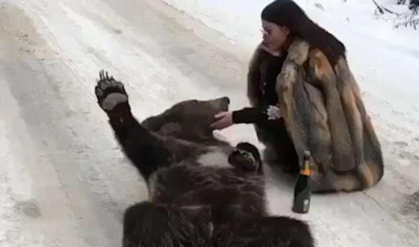 俄女子穿皮草喝香槟与熊合照引众怒