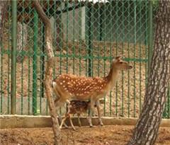 日本奈良公园设置中文告示牌 指导游客安全喂鹿