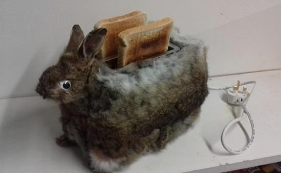 英动物标本制作师做兔子毛皮面包机引争议