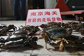 南京海关破获走私海蟹大案 案值达2.85亿元