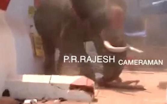 悲剧!印度一大象发怒踩死围观男子