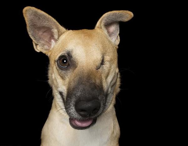 澳摄影师拍摄受伤救援犬 坚韧可爱让人暖心