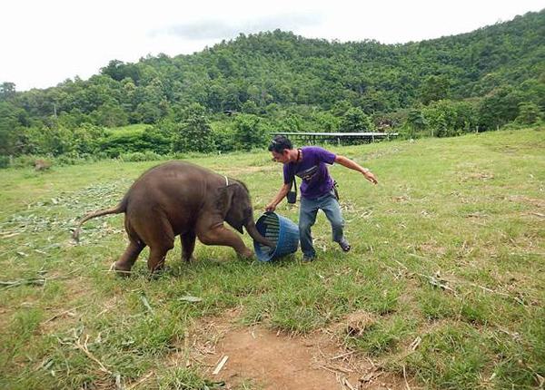 泰国小象与饲养员玩耍 开怀大笑尽显纯真