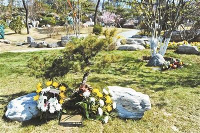 自然葬年增幅近60% 部分价格仅为传统立碑的1/30