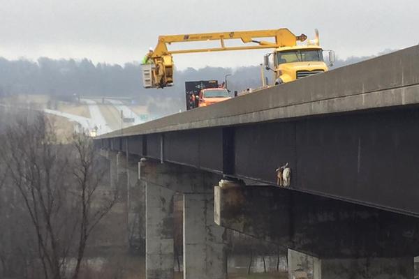 """美国山羊""""离奇""""被困桥上 当局出动吊车救援"""