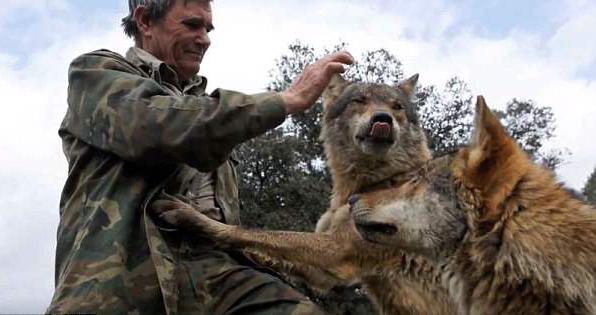 西班牙男子与狼生活12载 回到人类社会极不适应