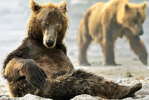 俄罗斯大熊如戏精上身 出水凹造型秀肌肉
