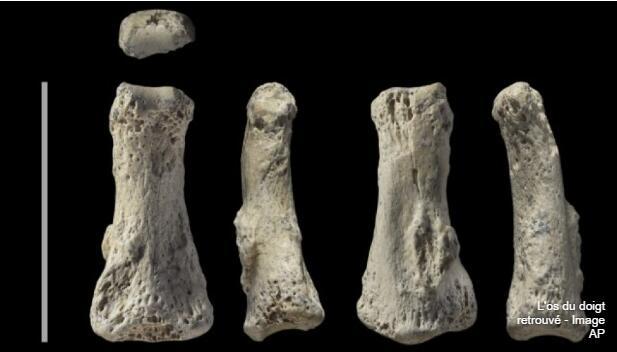 沙特发现8万多年前化石 人类离开非洲时间可能更早