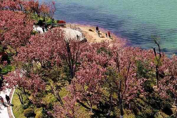 航拍商丘:如诗如画樱花岛