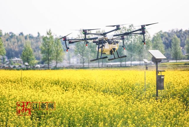 安吉:无人机撒农药 1小时搞定30亩