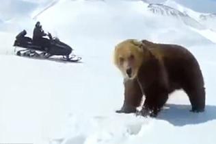 疯了吧!俄两男子追逐棕熊拍视频取乐