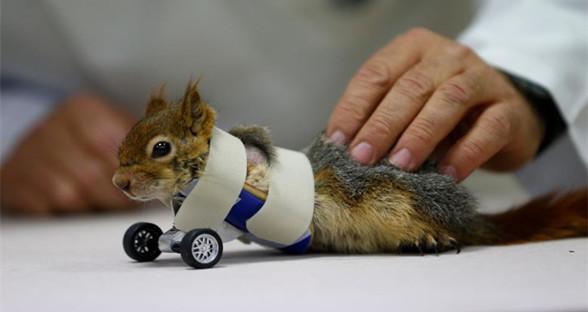 装假肢的动物们 你们过得还好吗?