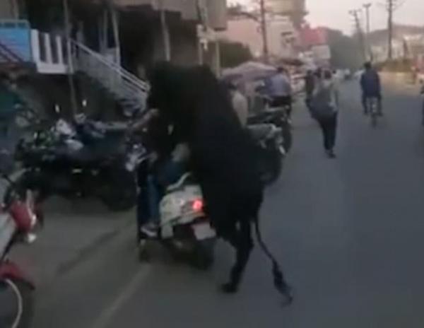 印度好色黑公牛扑倒街边电动车上两女子