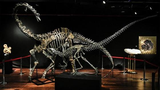 外媒:恐龙骨架成时髦装饰 中国买家开始入场