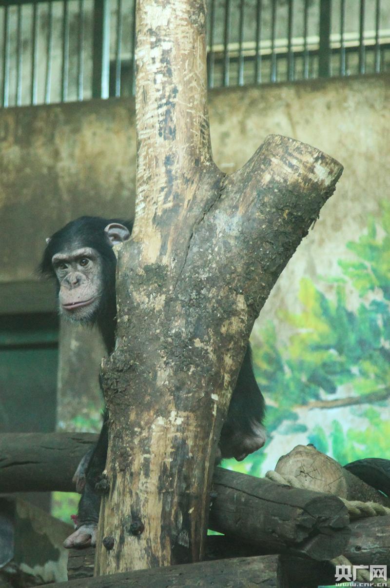 天津动物园引进濒危保护动物 今日正式与游客见面