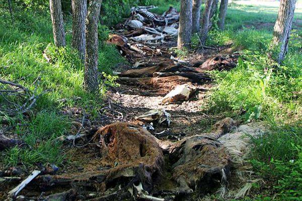 美一收容所被爆50匹马饿死 87只动物濒临死亡