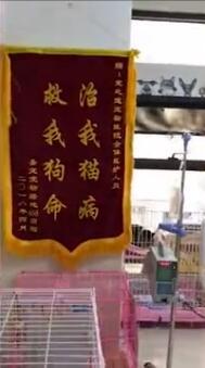 宠物主人为感谢医生送逗趣锦旗:治我猫病 救我狗命