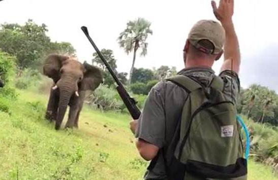 南非一野象欲袭击蜜月夫妇 被导游举手叫停