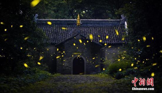揭秘萤火虫贩卖产业链:养殖困难 多为野生捕捉