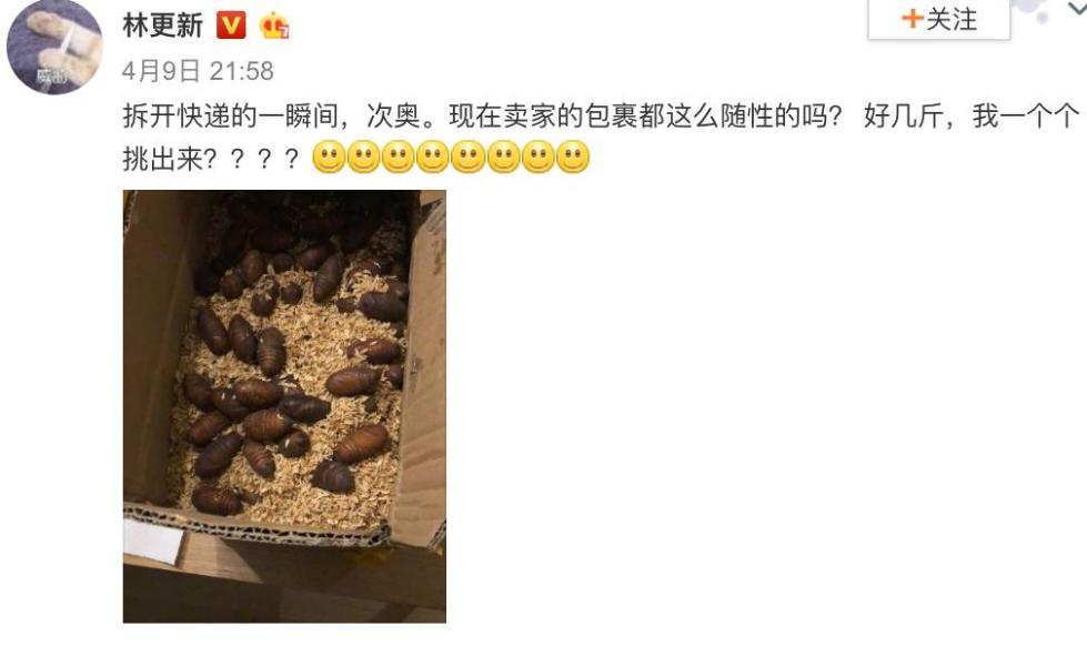 林更新上网买了个蚕蛹之后……这些奇葩的买家秀把我笑精神了!