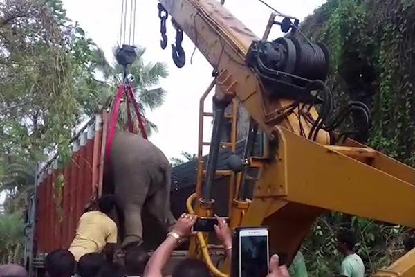"""印度大象凌晨误闯居民区 被起重机拦腰吊起送回""""家"""""""
