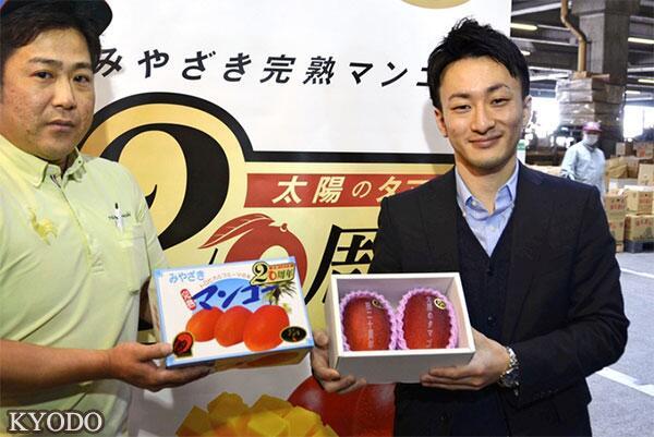 """日本""""太阳之子""""芒果拍出一个1.2万元天价"""