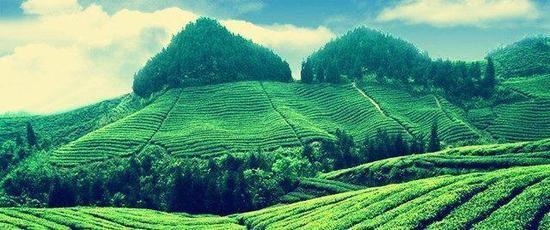"""四川是茶的发源地之一,茶文化历史悠久,有""""蜀土茶称圣""""的美誉,功名千秋颂。"""
