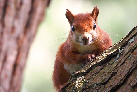 英哺乳动物摄影大赛佳作 展现别样之美