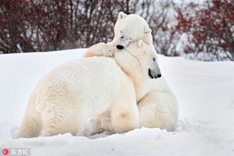 小编盘点了一组动物们的拥抱照,暖暖爱意溢出屏!