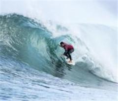 澳海域鲨鱼出没伤人 冲浪比赛被迫取消