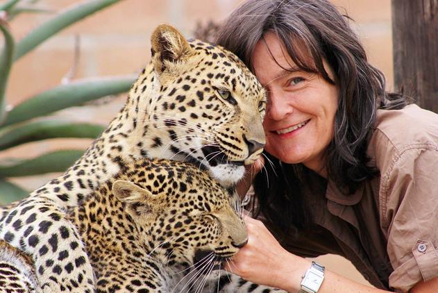 南非女子建猫科动物保护区 与5只豹子朝夕相处
