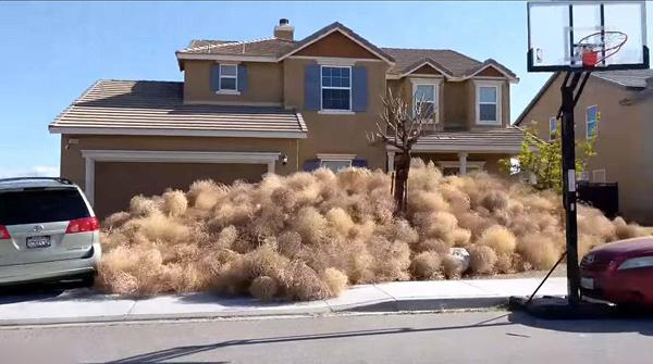 美国加州强风致风滚草横行 包围住宅居民被困家中