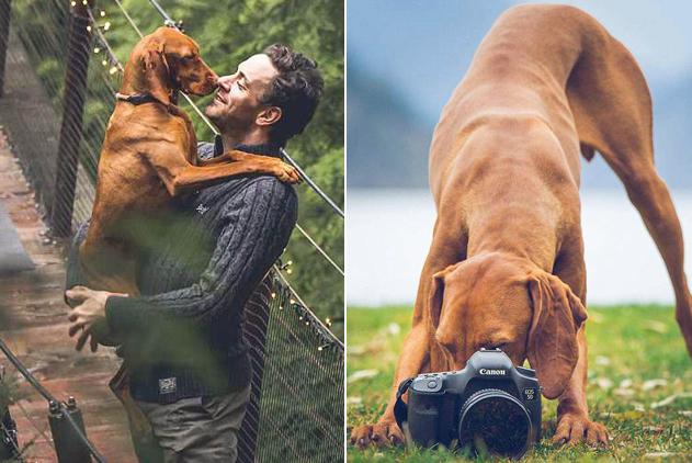 加拿大小狗与主人环游世界 旅行摆拍走红网络