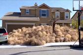 美加州强风致风滚草横行 包围住宅居民被困