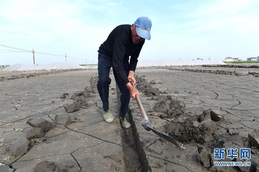 江苏海安:春耕生产进入高潮