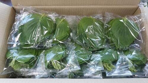 韩媒:韩国新鲜蔬菜走海运摆上外国人餐桌