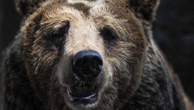 死里逃生!俄一男子森林采药被熊攻击后幸存