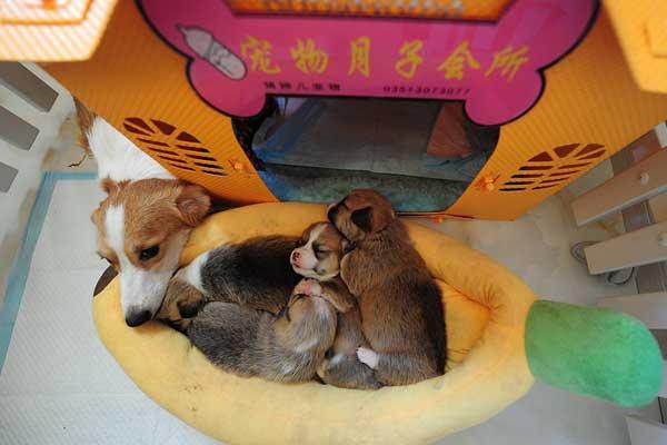 实拍太原宠物月子中心 宠物享受贵宾级待遇