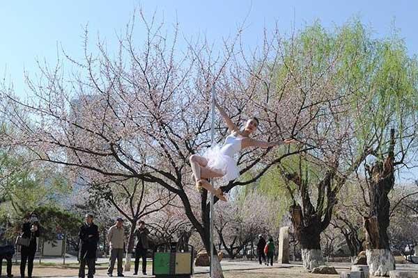 钢管舞者杏花树下展示力与美