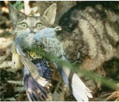 澳哺乳动物数量锐减 科学家:灭绝危机日益严重