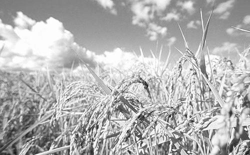 农业展望:从数据和信息中研判市场