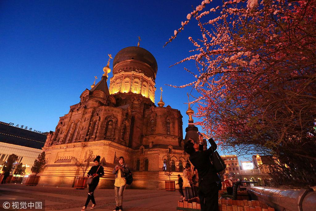 哈尔滨:榆叶梅花开 索菲亚教堂夜色迷人