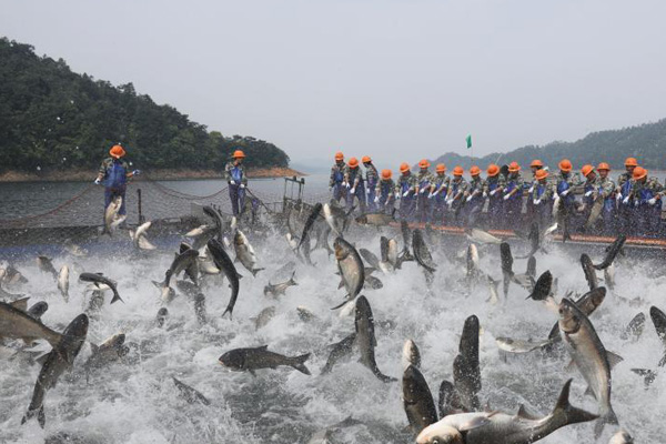 """浙江千岛湖上演""""巨网捕鱼"""" 现万鱼群跃盛景"""