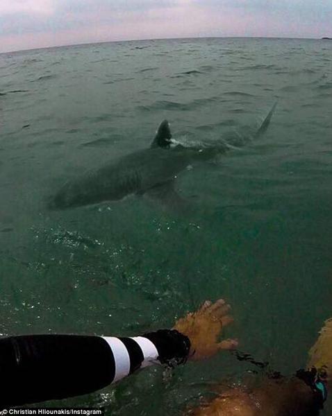 惊险!澳少年冲浪遭遇鲨鱼 相距仅1.5米