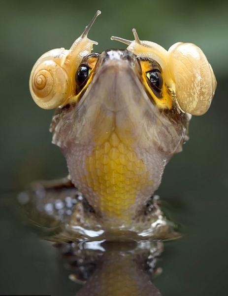 """印尼丛林惊现""""摇滚鳄"""" 头戴""""蜗牛耳机""""超有范儿"""