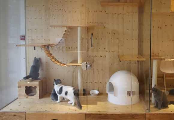 杭州开了家猫咪酒店 为爱宠提供星级服务