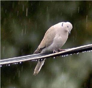 瑞士濒临灭绝鸟类高达近4成 专家呼吁采取措施
