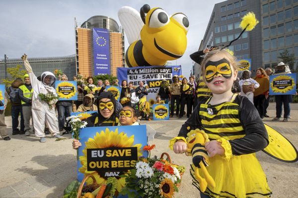 比利时民众扮成蜜蜂集会 呼吁欧盟通过新碱类农药禁令