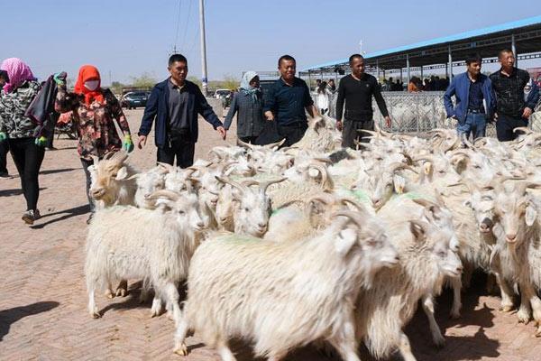羊群交易市场忙