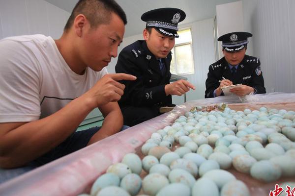 连云港警方查获400余只白鹭鸟蛋 部分已孵化